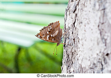 Brown butterfly sitting on a pine tree