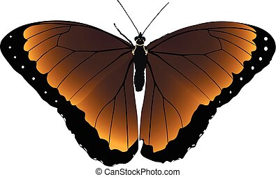 Brown butterfly vector