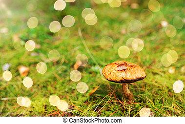 brown cap boletus mushroom in autumn forest