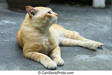 brown cat sit on floor - brown cat sit and look to upsite