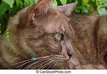 brown cat under the tree in garden