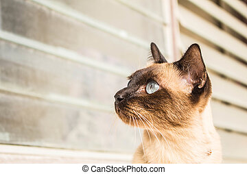 Brown cat with bright eyes