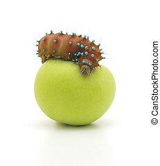 brown caterpillar and apple