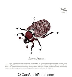 Brown chafer on a white background. Image of garden pests