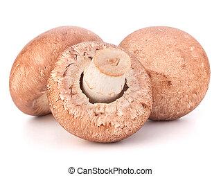 Brown champignon mushroom isolated on white background...