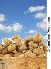 brown champignon mushrooms