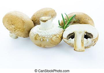 Brown champignon