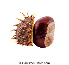 Brown chestnut fruit with cover, close up