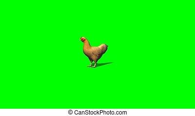 brown chicken idle - green screen