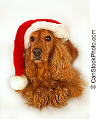 brown cocker spaniel with red christmas hat