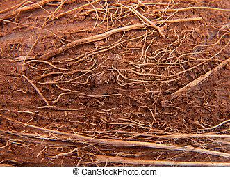 brown coconut peel macro background