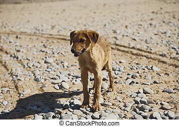 Brown color young small dog looking for food at empty land.
