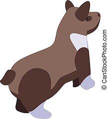 Brown corgi dog icon, isometric style