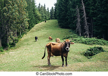 Brown cow on a meadow in forest