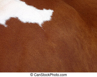 Brown Cow Skin with a White spot in the corner
