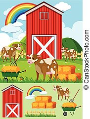 Brown cows and red barn on the farm