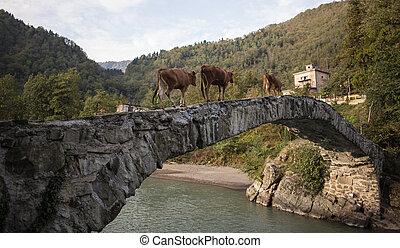 Brown cows walking on bridge road in the Georgian village