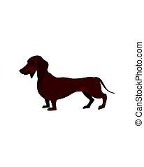 Brown dachshund