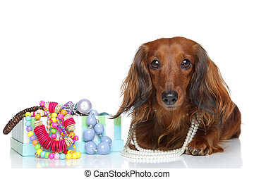 Brown Dachshund lying on a white background