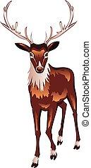 Brown Deer - Cartoon brown male deer illustration on white...