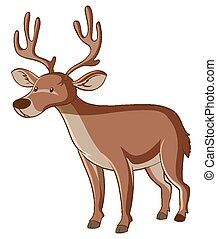 Brown deer on white background