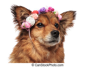brown dog head with colorful flowers crown looking to side
