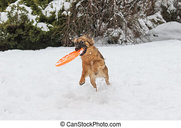 Brown dog is catching orange frisbee