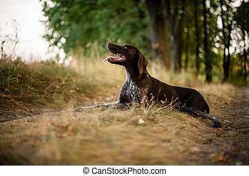 Brown dog lying on the dry grass in the autumn forest