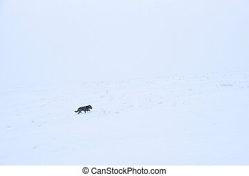 Brown dog mongrel in a winter snowstorm day in the field