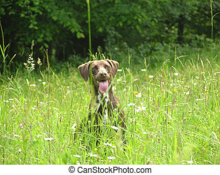 Brown dog nearly hidden in the open countryside