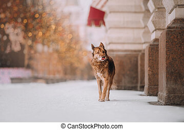 Brown dog on the street in winter