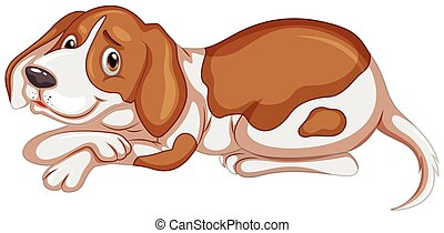 Brown dog on white background