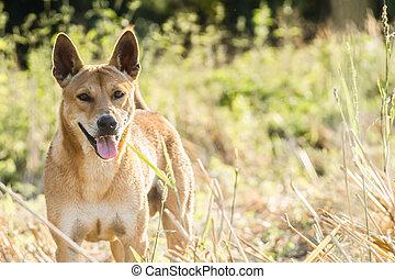 Brown dog running in the grass field