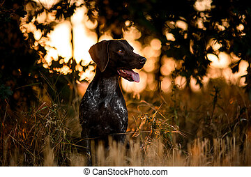 Brown dog sitting among trees in the forest open his mouth looking at the side