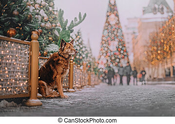 Chocolate dog sitting on new year's background near dark green tree