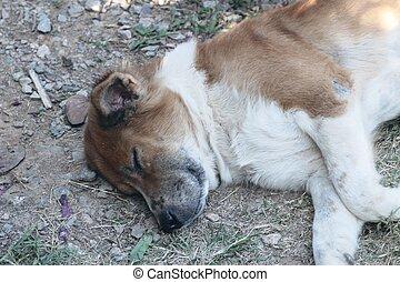 Brown dog sleeping on the floor grass.