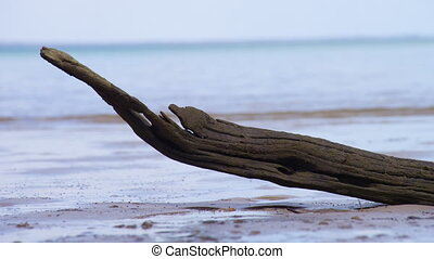 Brown driftwood on the shore - A close up shot of brown...