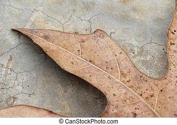 Brown dry leaves on the floor