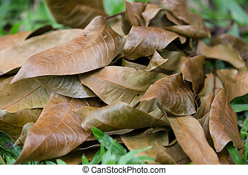 Brown dying leaves on the grass floor