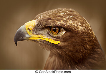 brown eagle bird portrait