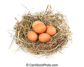 Brown eggs in a nest on a white