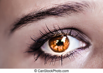 Brown Eye Makeup. Beautiful Eyes Make-up. Macro