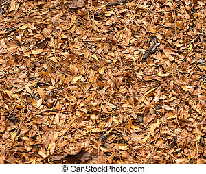 Brown fall's leaves like