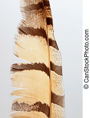 Brown feather