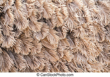 Brown feather ostrich