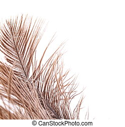 Brown feathers half background