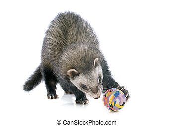 brown ferret and ball - playing brown ferret in front of...