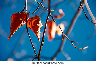 foliage on the branch in sunlight
