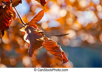 brown foliage on the branch in sunlight