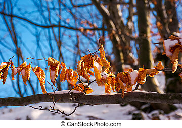 brown foliage on the branch in winter
